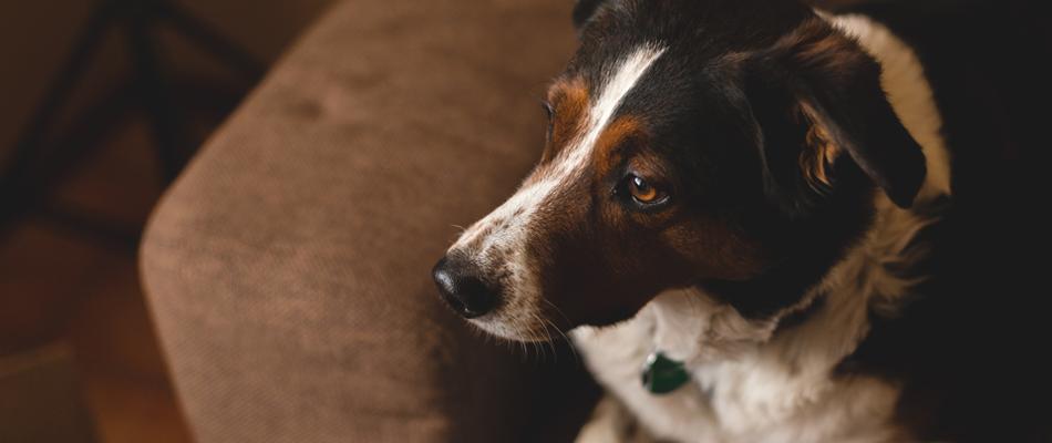 Sicherheitstechnik an Haustiere anpassen